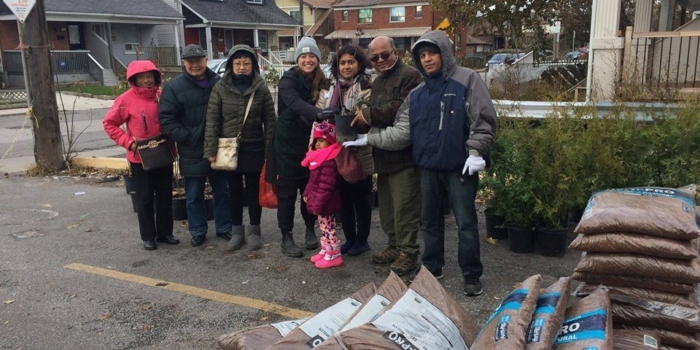 HSDN International Distributed Free Tree to the Community